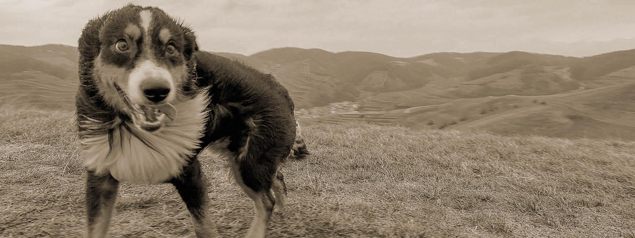 ängstlicher Hund im Freilauf
