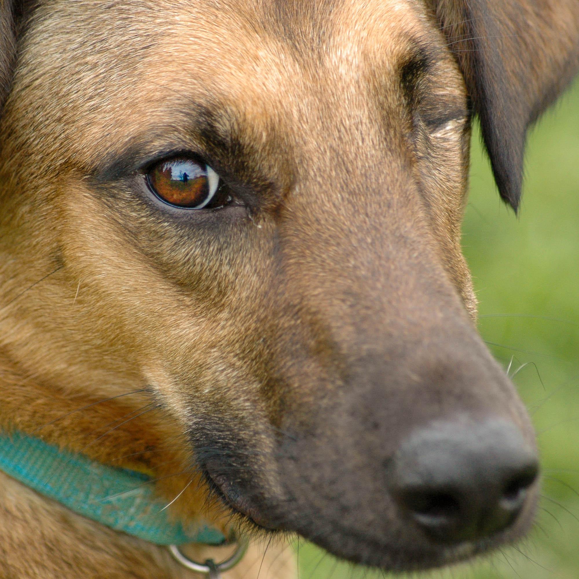 Einäugiger Hund schaut unsicher