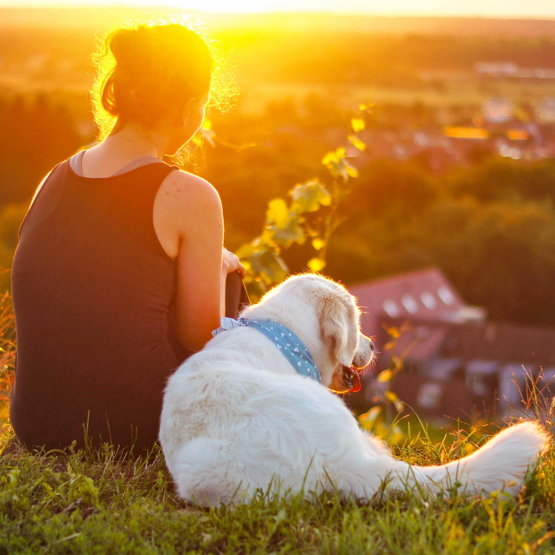 Frau sitzt mit Hund im Sonnenuntergang und schaut auf die Stadt