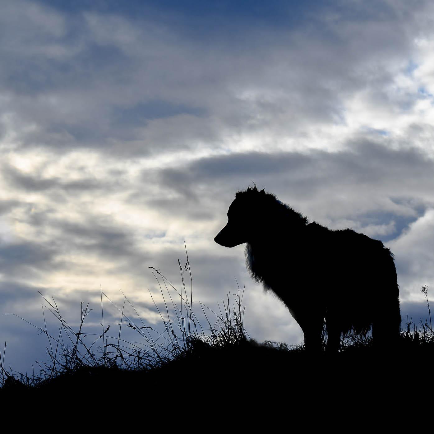 Umrisse eines Hundes im Sonnenuntergang - Hund scheint schwarz
