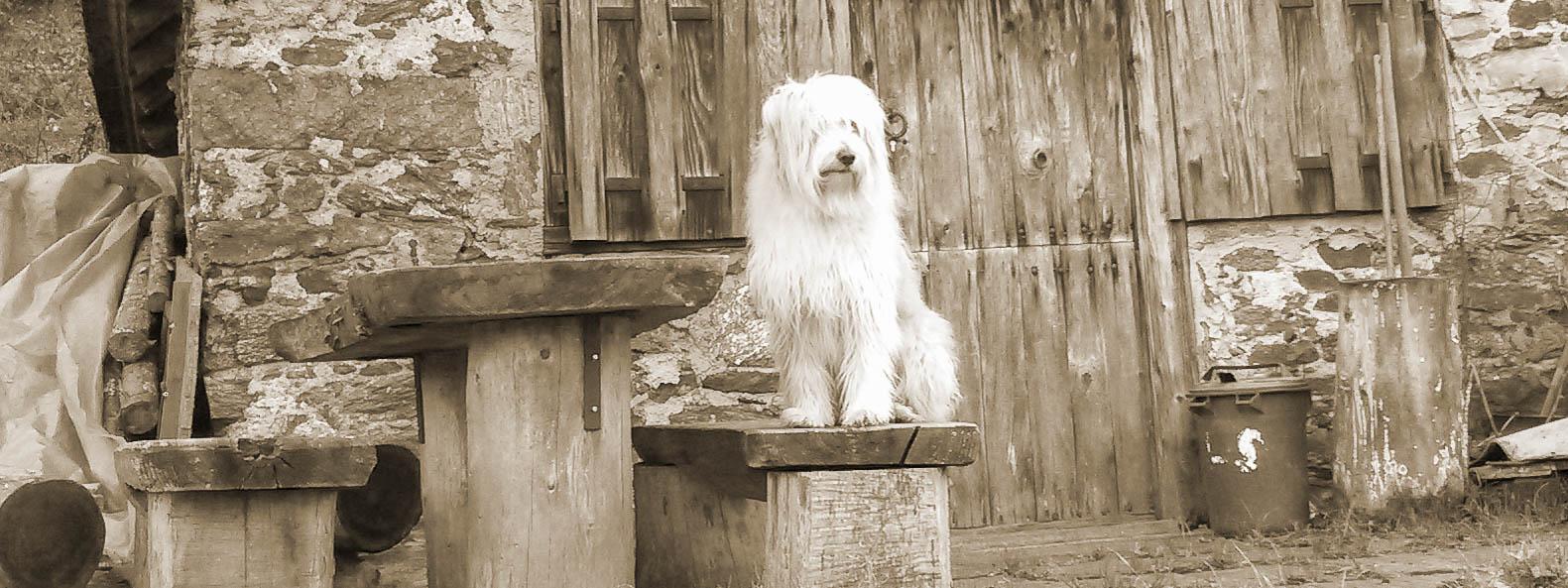 Ein Hund sitzt auf einer Bank vor einer Hütte