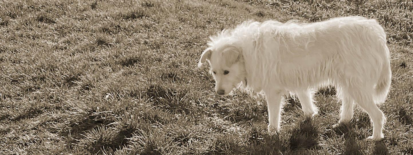 Hund steht auf einer Wiese und beobachtet etwas