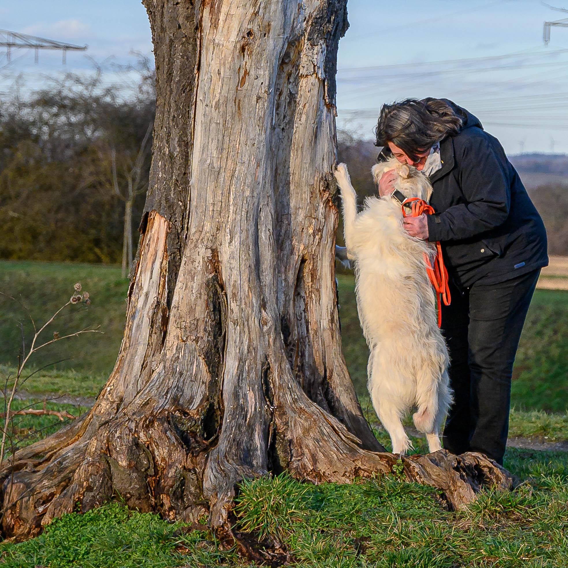 Mensch umarmt liebevoll Hund, der an Baum hochsteht
