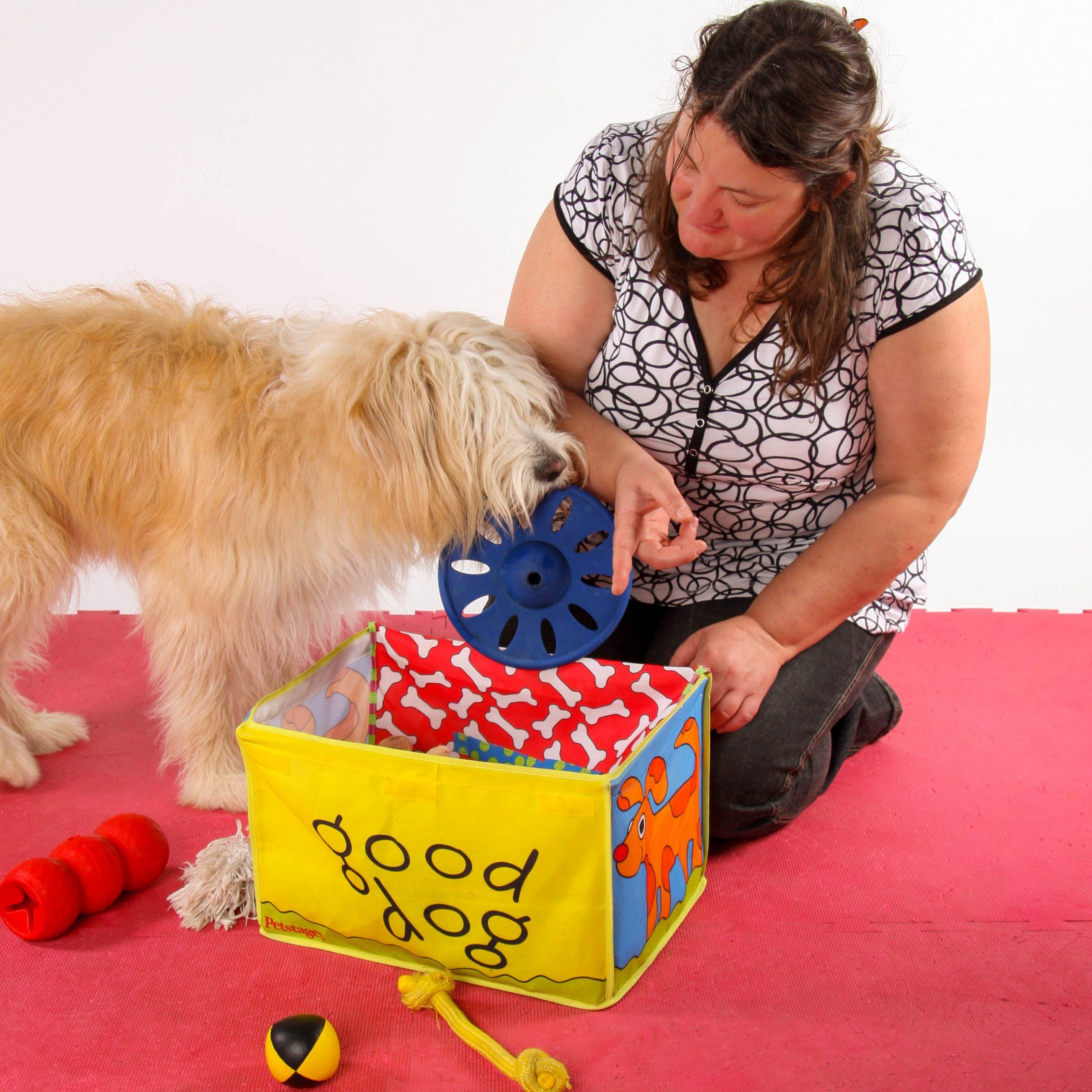 Mensch sitzt mit Hund auf dem Boden, der Hund soll die Spielsachen aufräumen