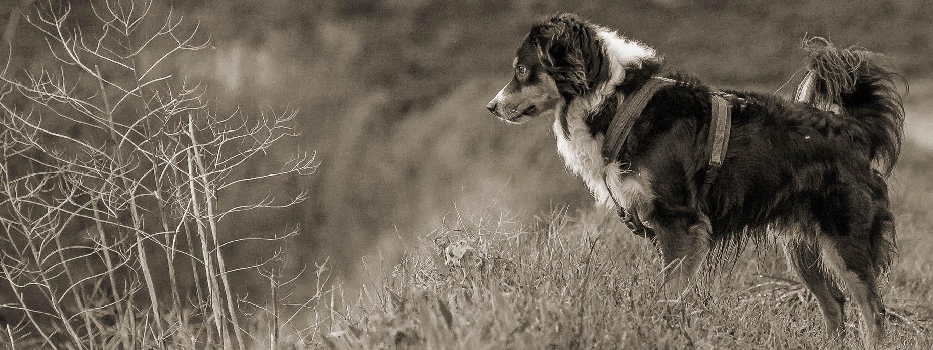 Aussi steht im Gras und schaut ins Tal