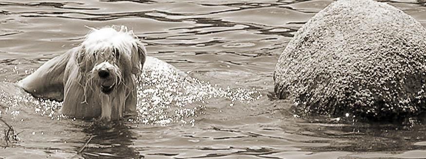 nasser Hund im Wasser, der einen Ball im Maul hat