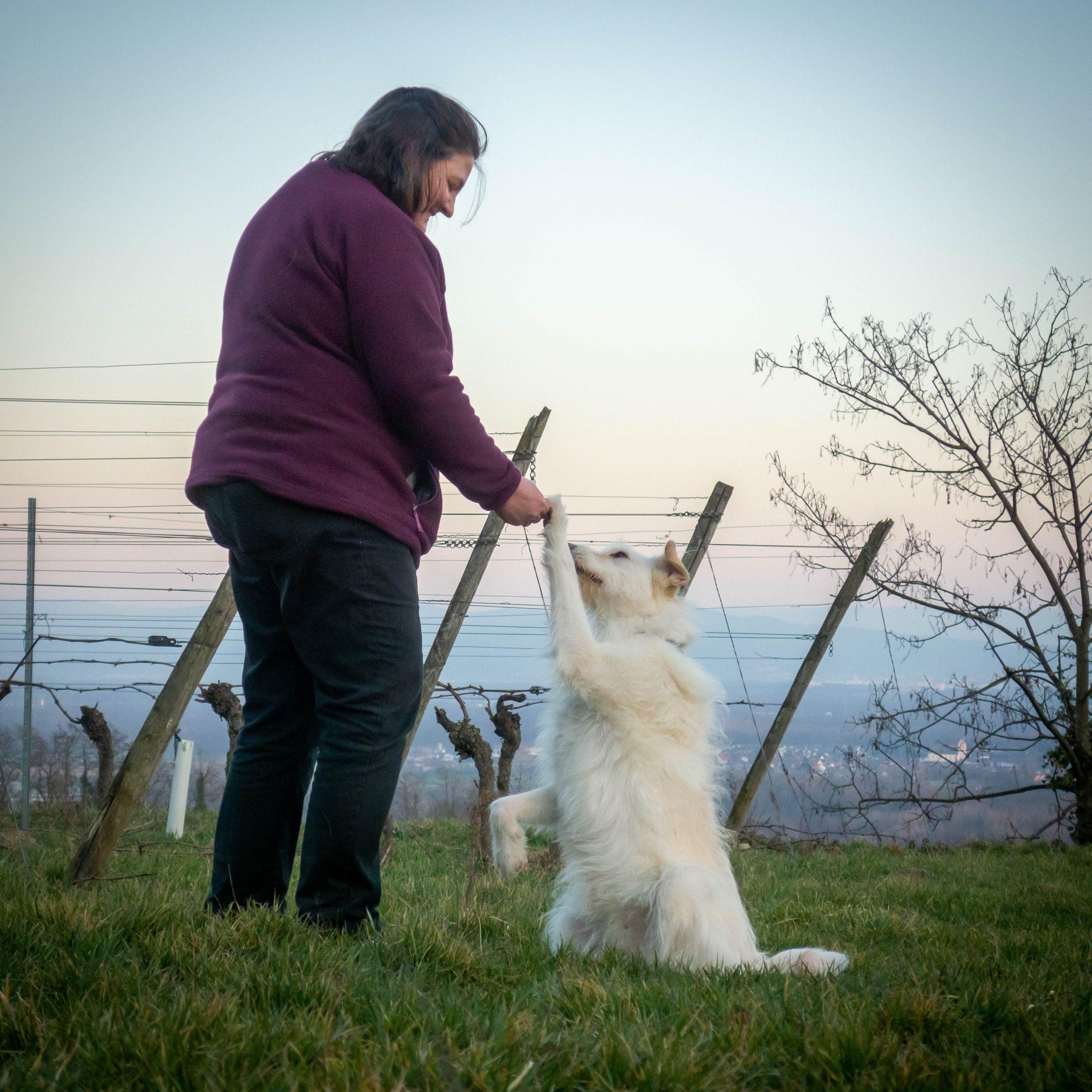 Mensch mit Hund in den Reben, Hund macht Männchen