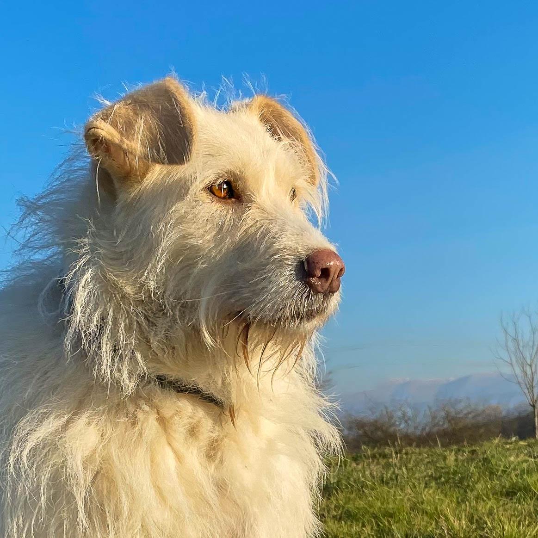 Porträt eines weißen Hundes, im Hintergrund Himmel