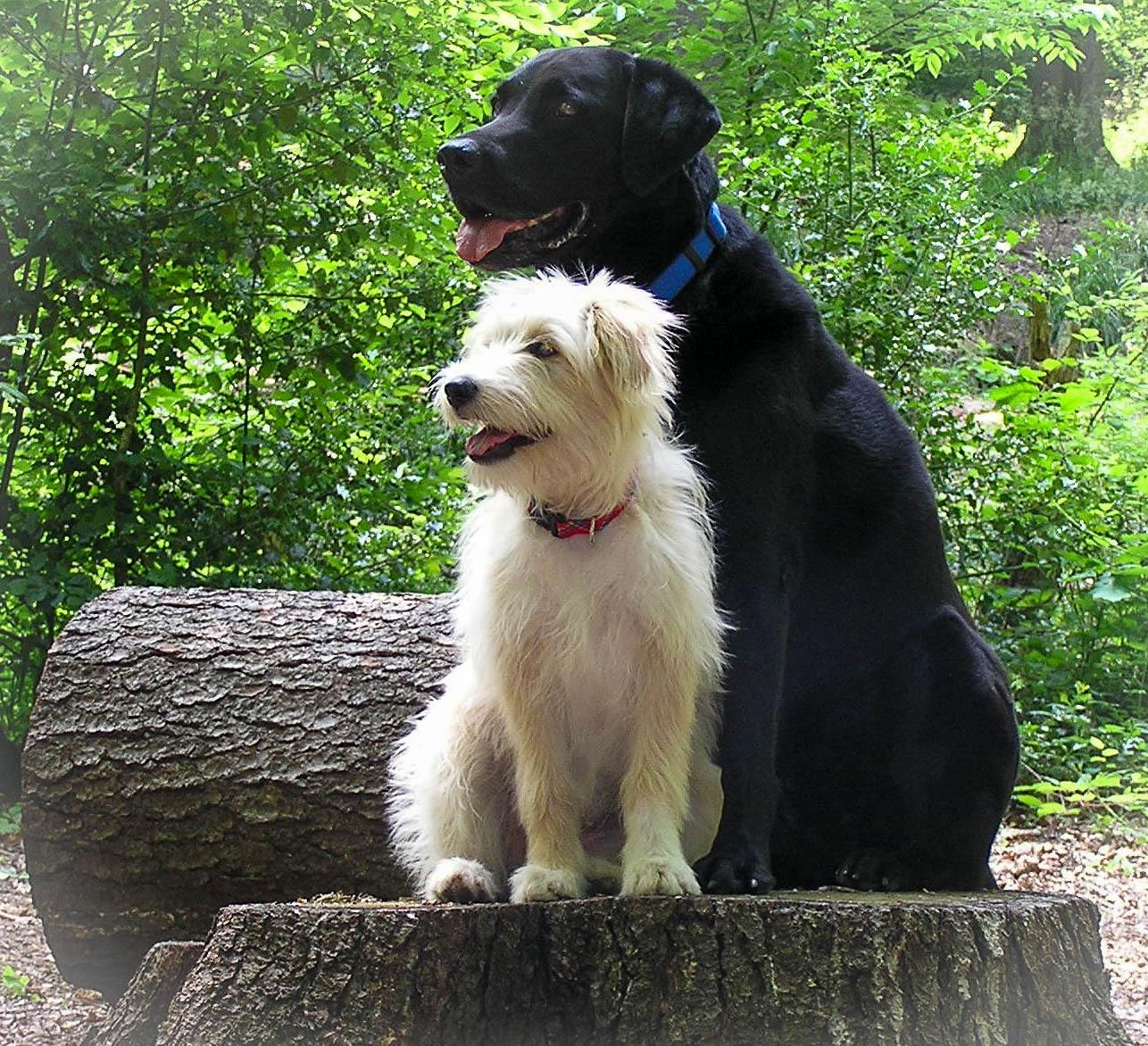 Zwei Hunde sitzen auf einem Baumstamm