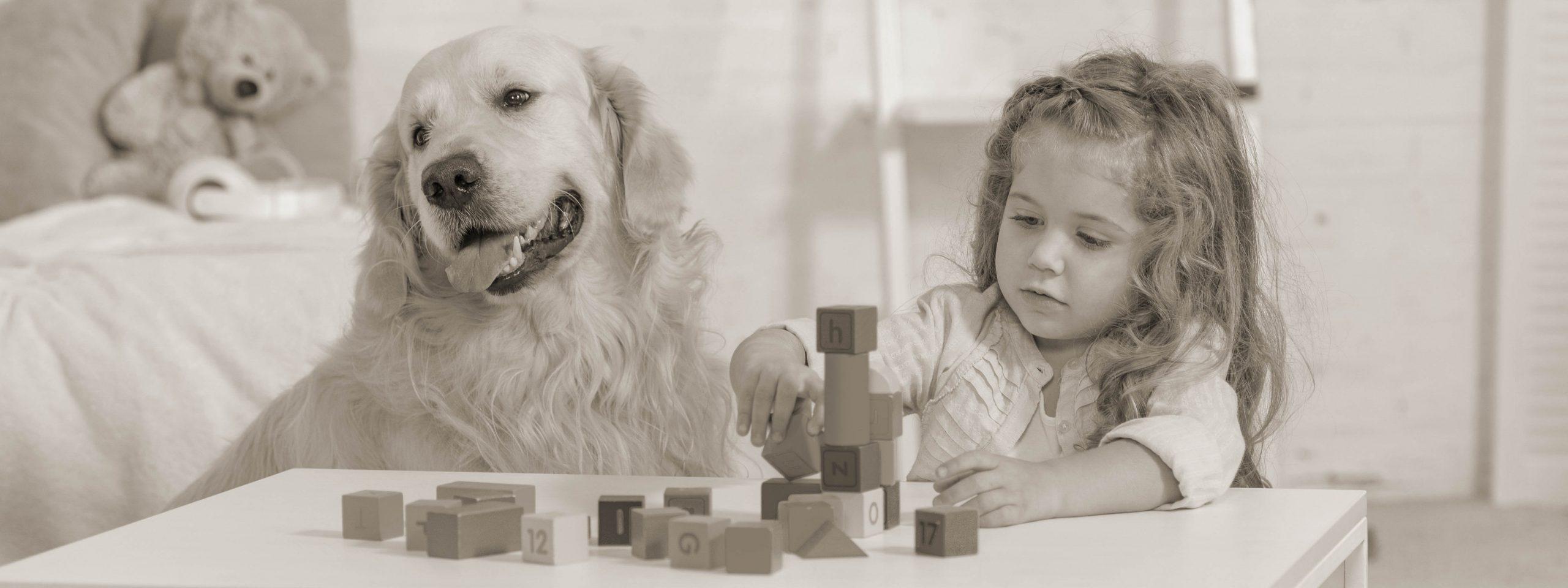 Kleines Mädchen spielt mit Bauklötzen, daneben sitzt ein Golden