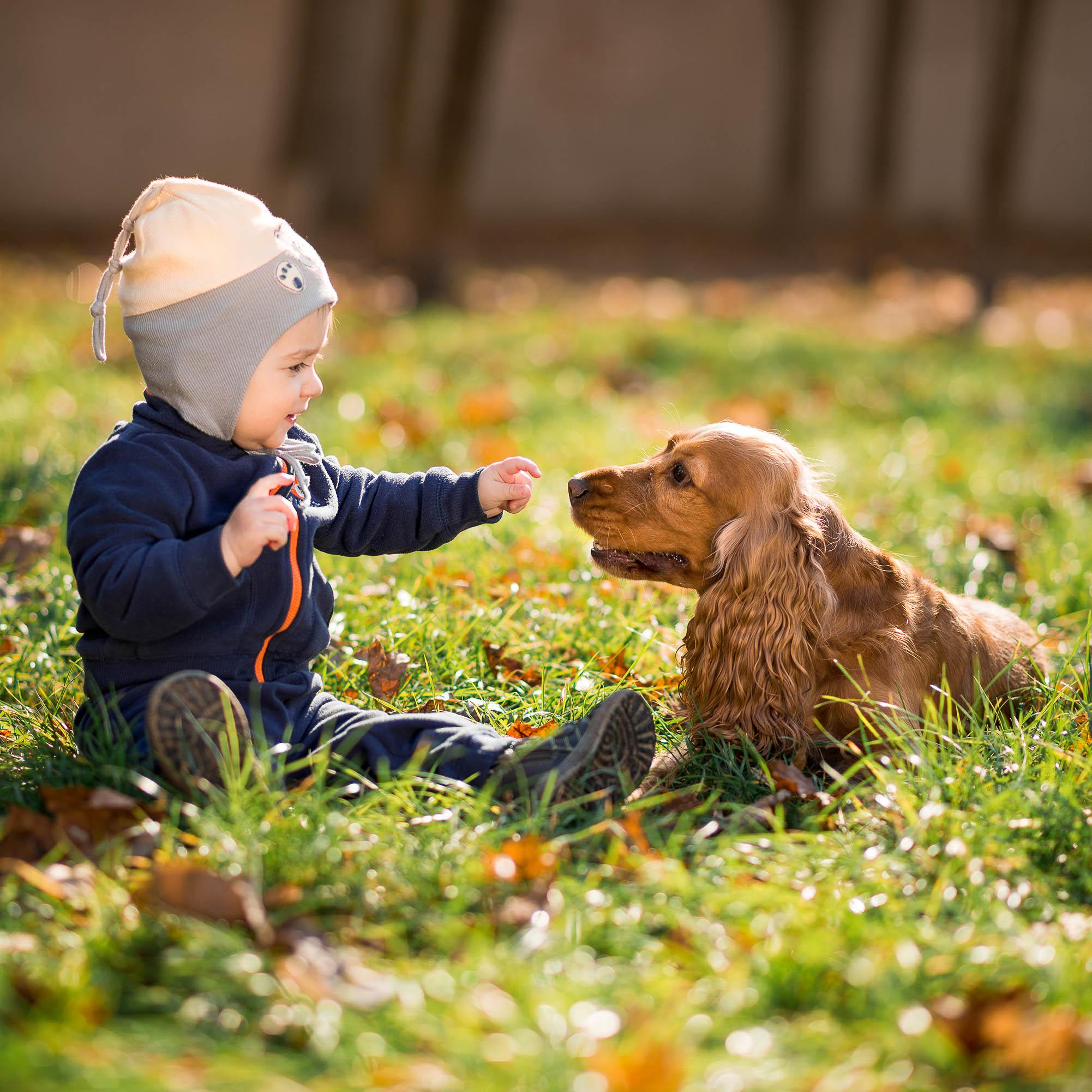 Kleinkind sitzt mit einem Hund auf einer Wiese