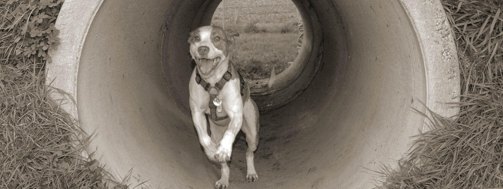 Ein Hund rennt durch einen großen Tunnel