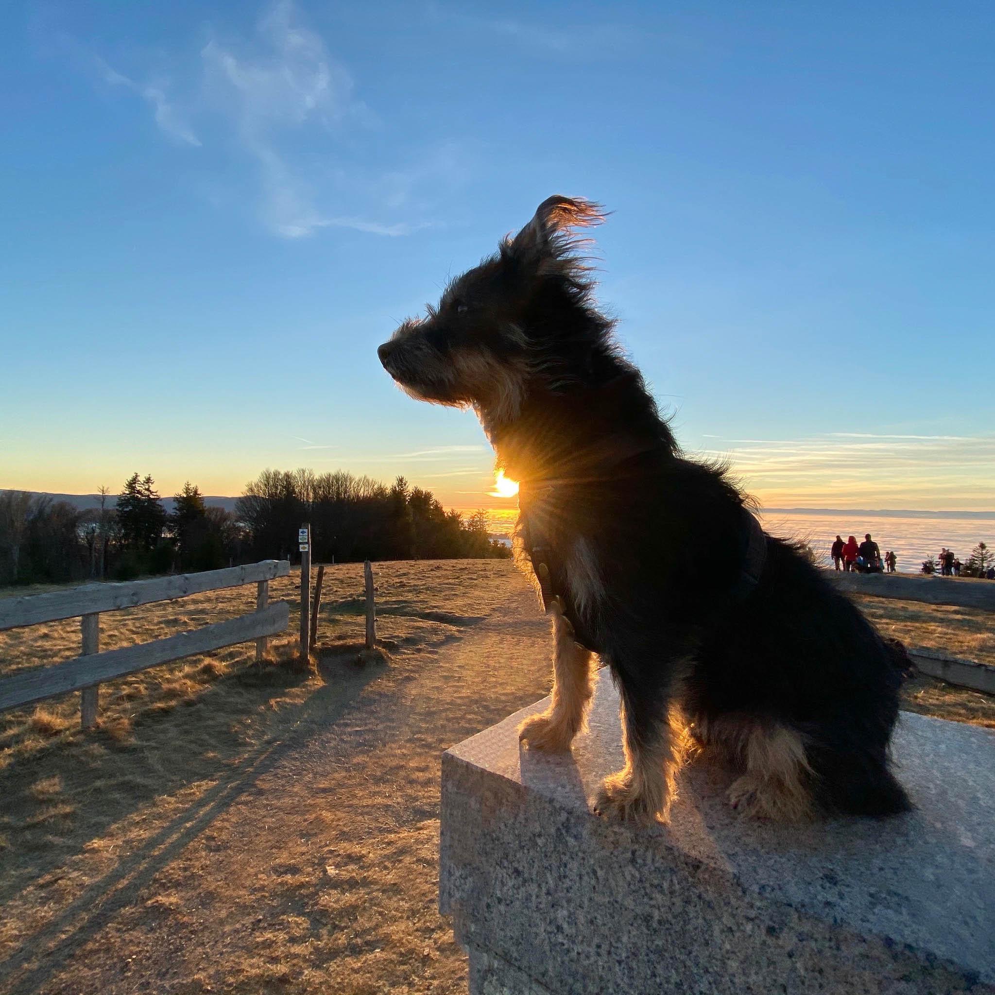 Ein Hund sitzt im Sonnenuntergang auf einem Stein