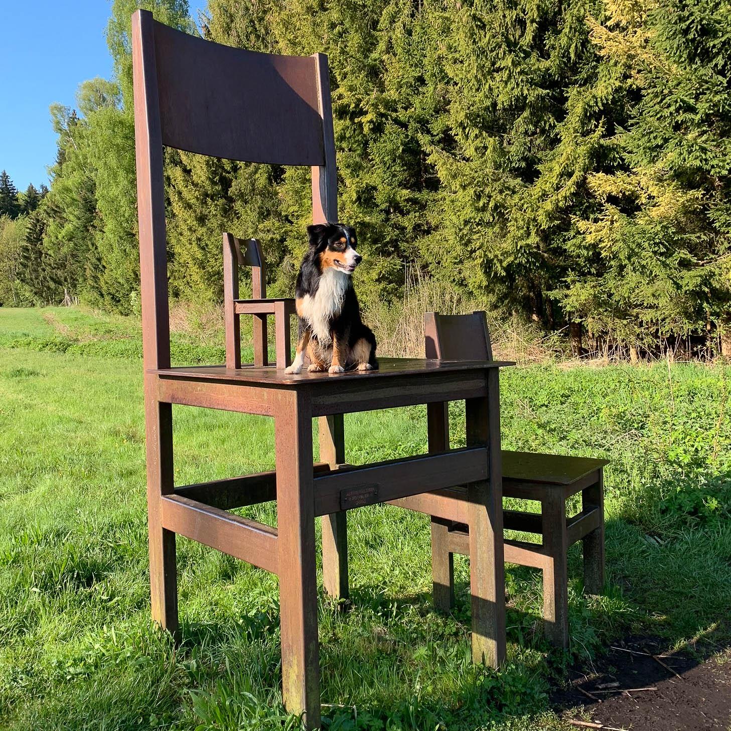 Australien Shepard sitzt auf einem sehr großen Stuhl