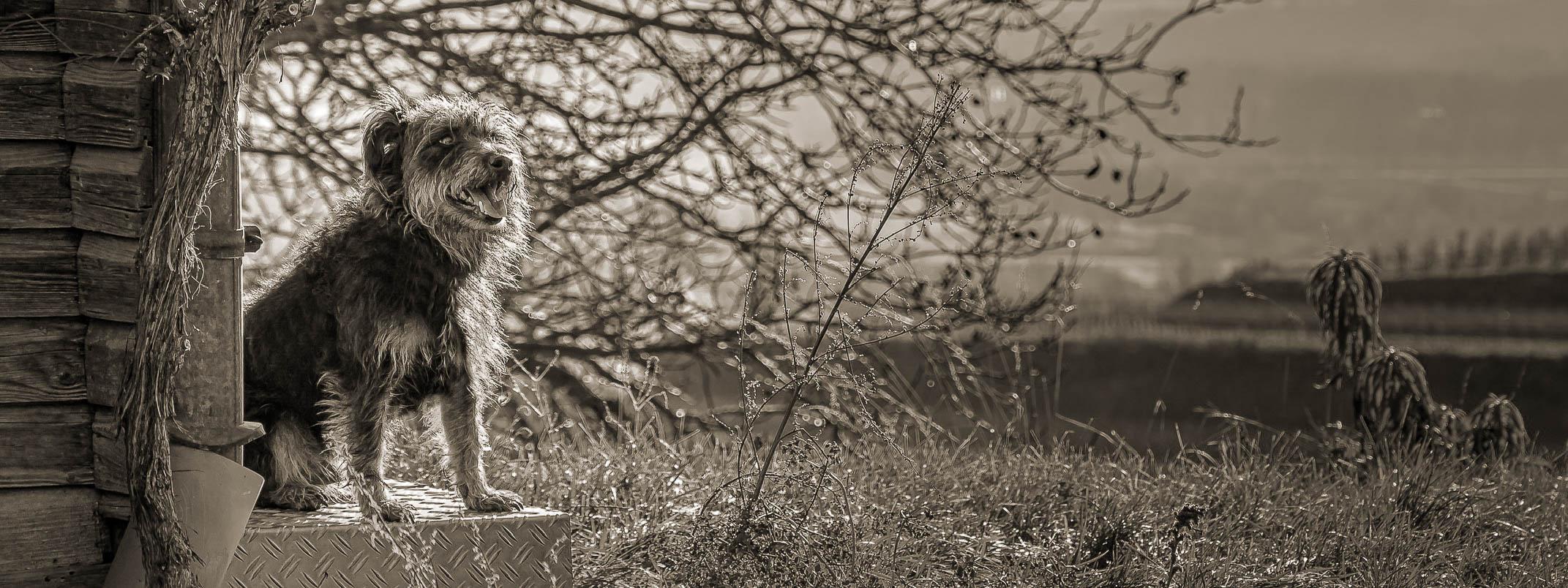 Ein Dackel sitzt vor einer Hütte