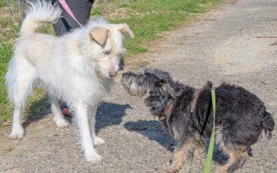 Körpersprache Hund – Teil 1