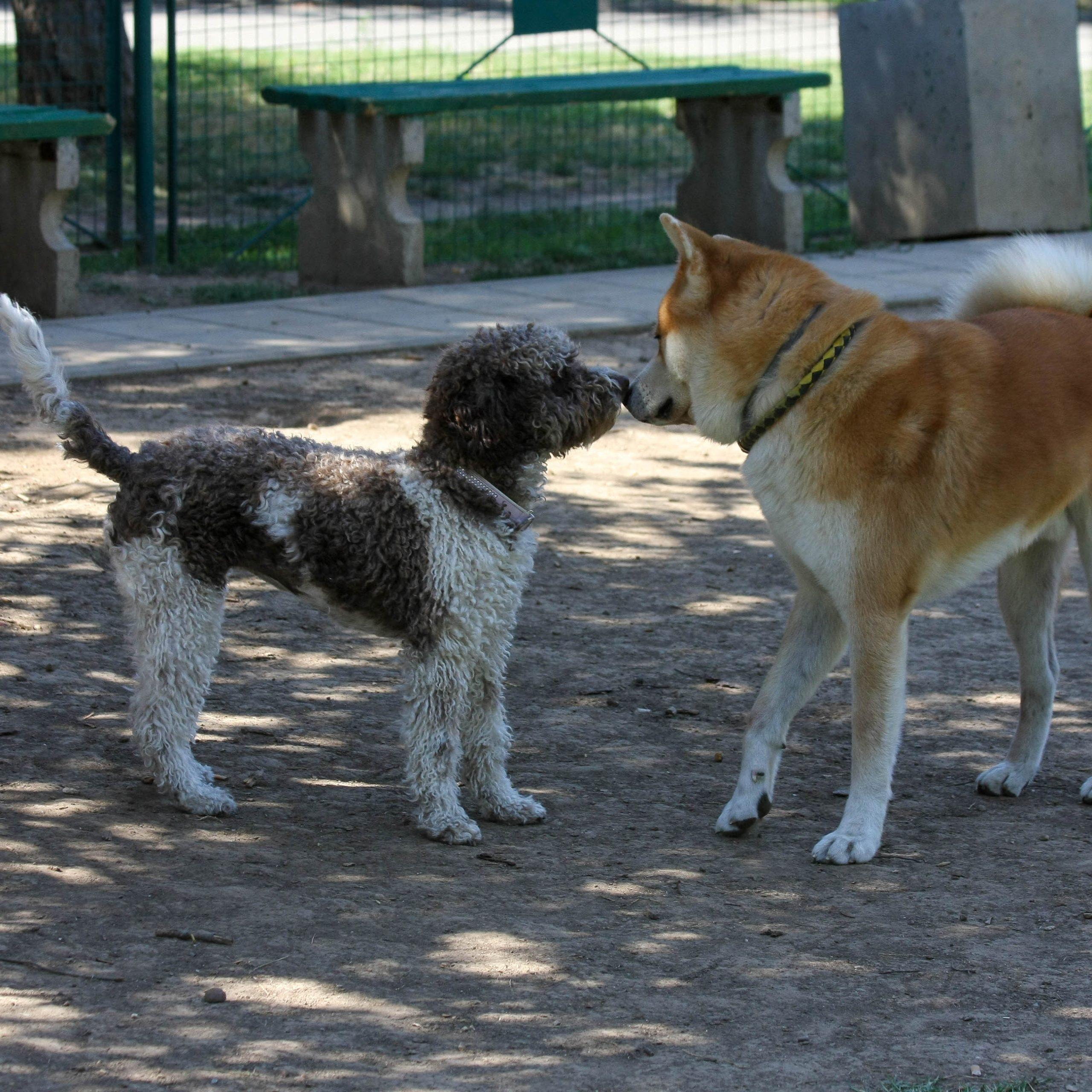 Zwei Hunde begegnen sich entspannt - Körpersprache