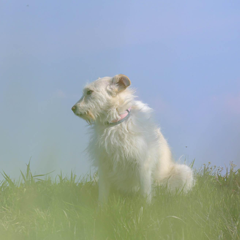 Hund sitzt auf einer Wiese im Hintergrund Himmel