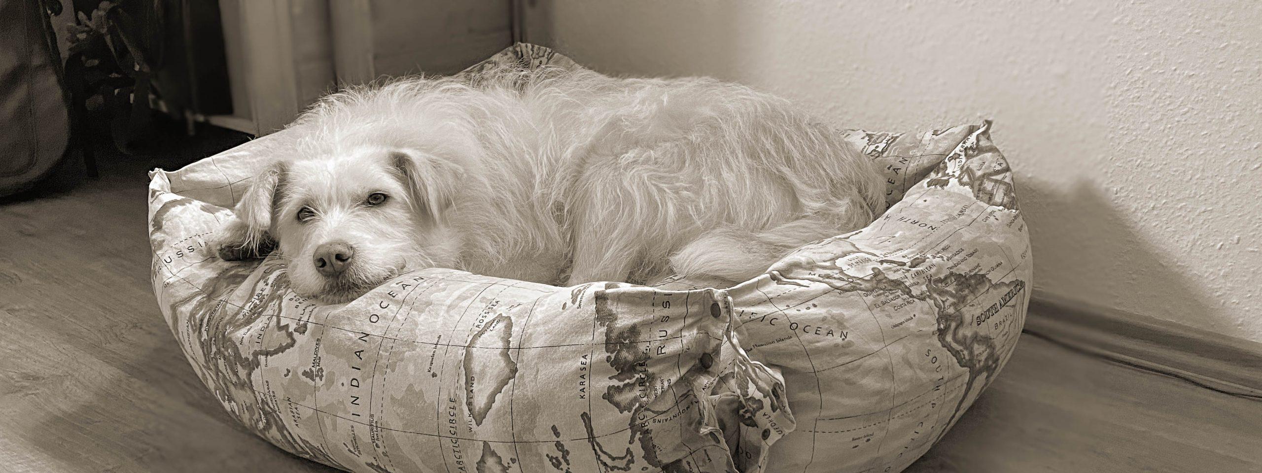 Hund liegt im Hundebett