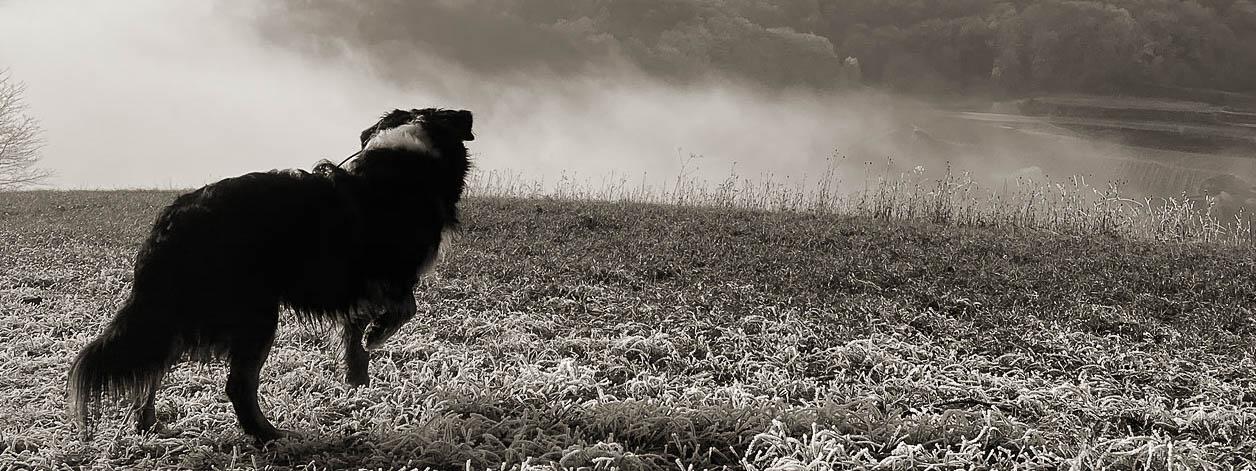Ein Hund steht mit erhobener Vorderpfote auf einer Wiese