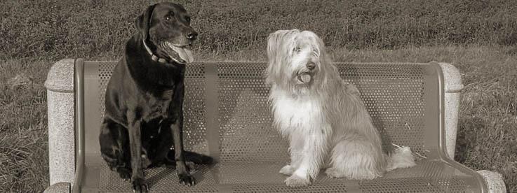 Zwei Hunde sitzen auf einer Bank