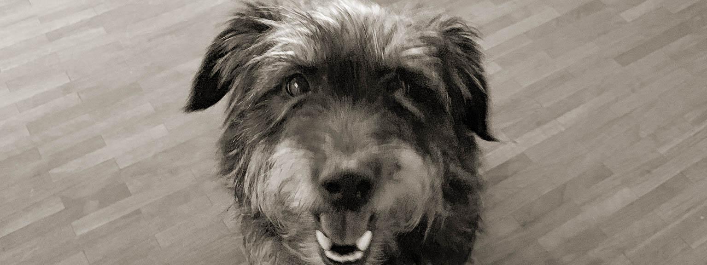 kleiner Hund schaut süß