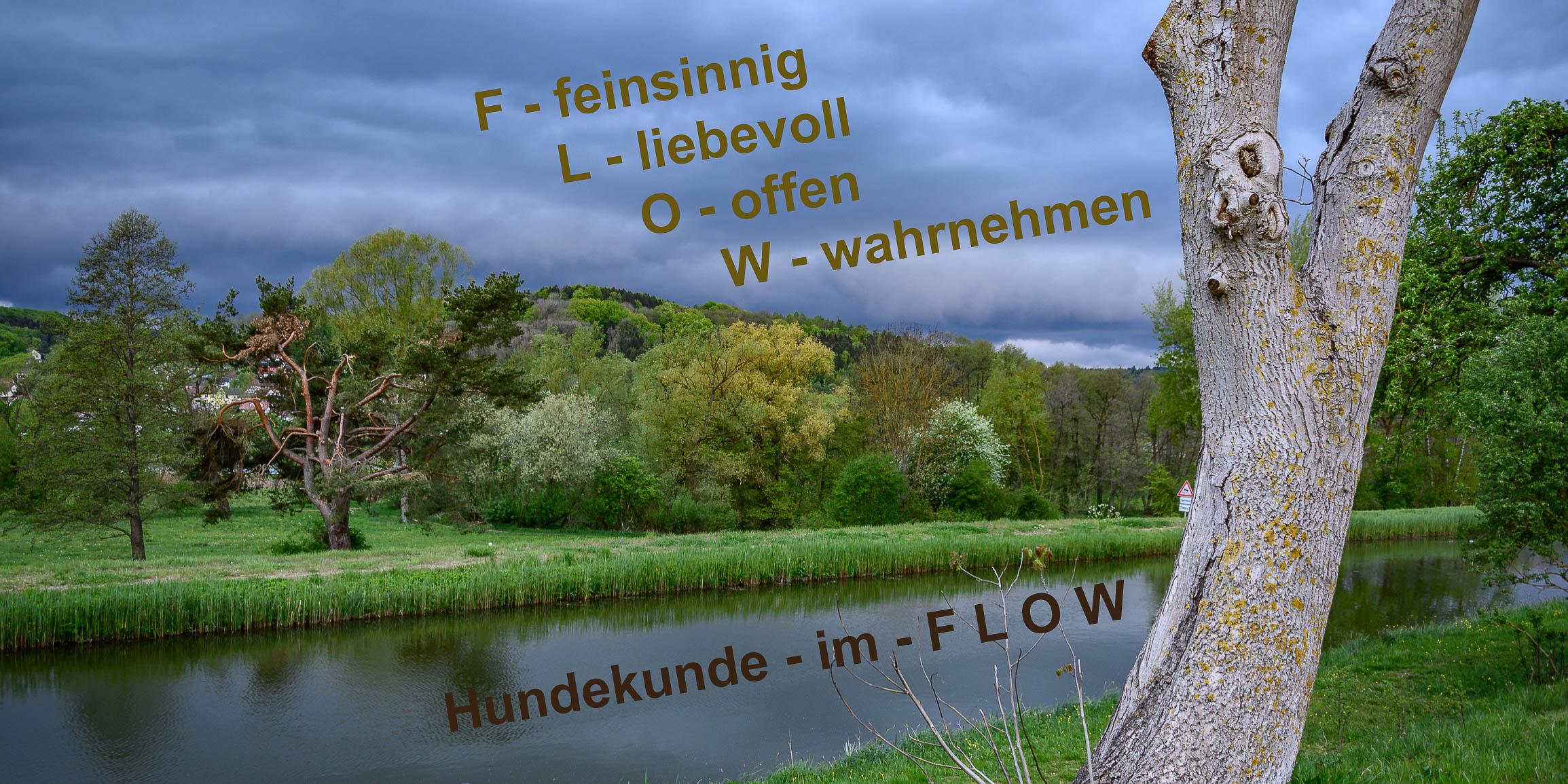 Beschreibung von Hundekunde-im-flow in Bild mit Fluss