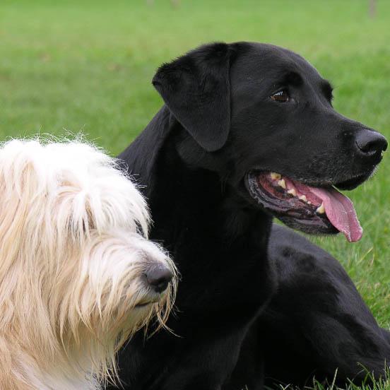 Zwei Hunde machen Platz auf einer Wiese