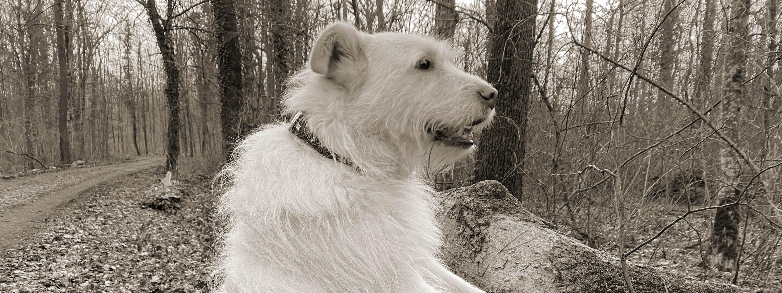Ein Hund hält Ausschau, was es im Wald alles gibt