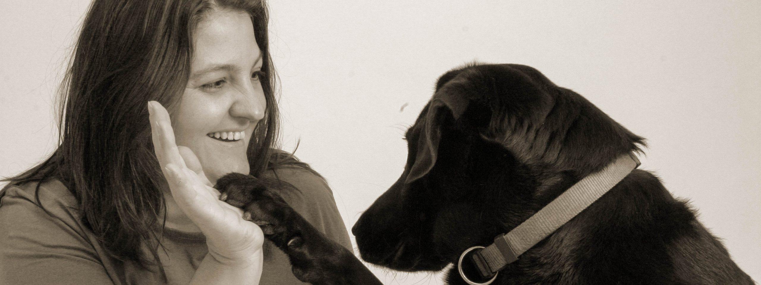 Labrador schlägt seine Pfote in die Hand seines Frauchens