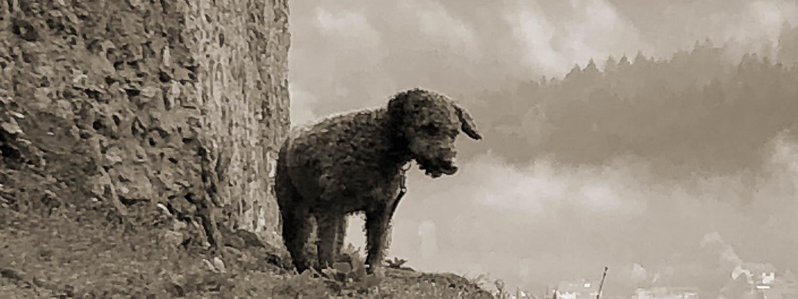 Ein Hund steht vor einer Burg am Berg