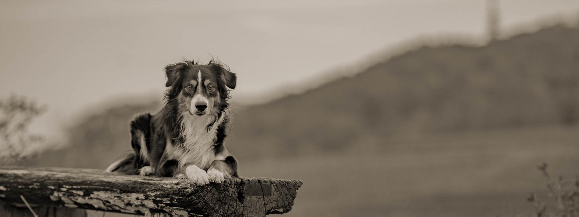 Ein Hund sitzt auf einer Bank auf einem Berg