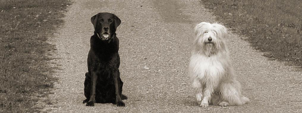 Zwei Hunde machen Sitz auf einem Feldweg