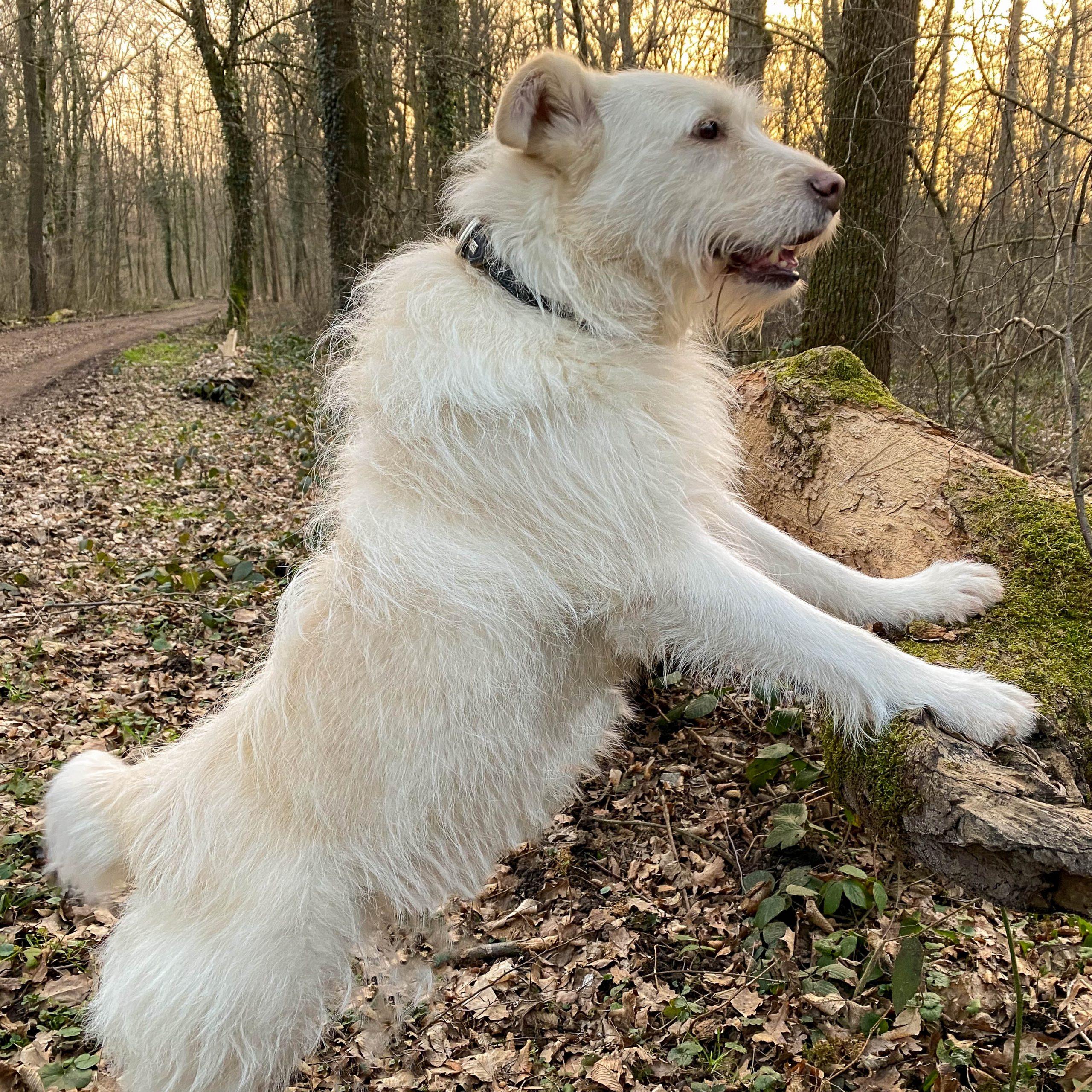 Hund steht auf Hinterpfoten am Baum und schaut sich im Wald um
