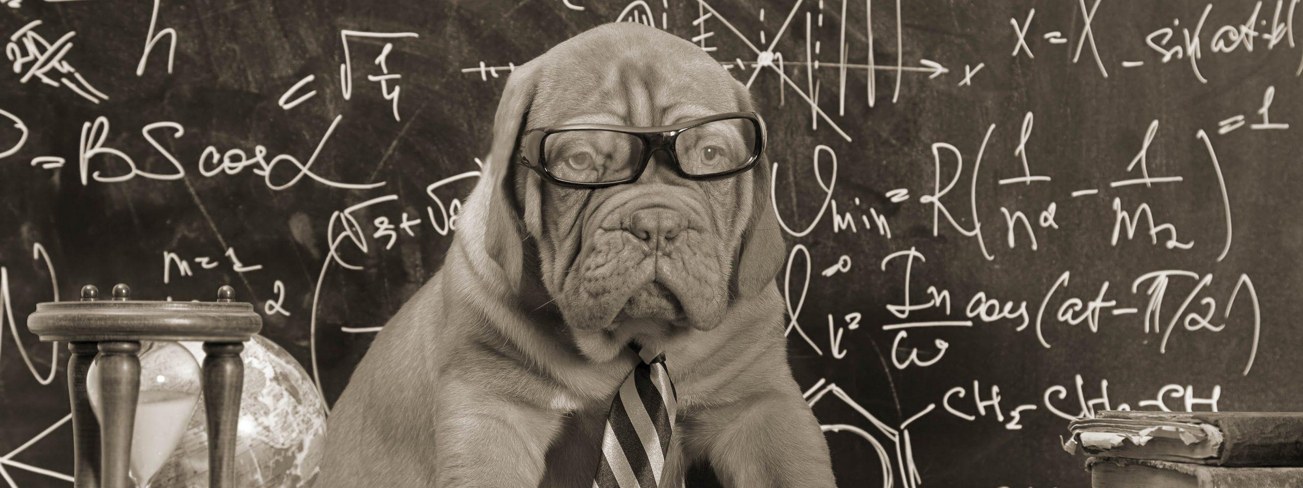 Hund mit Brille vor einer beschriebenen Tafel als Lehrer