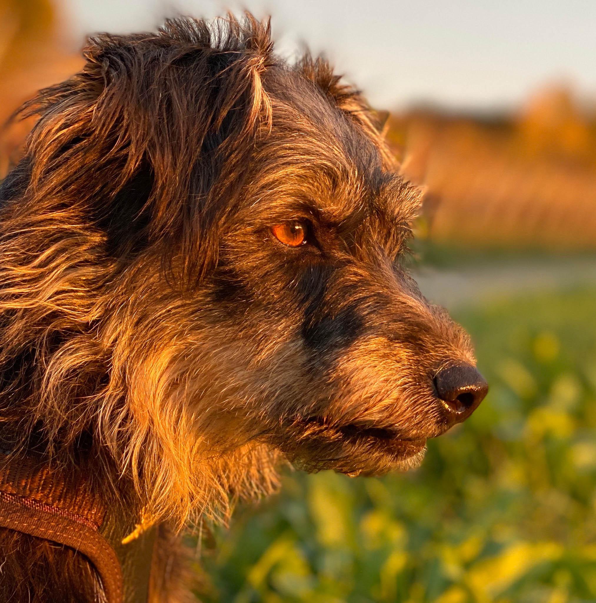 Hund im Profil - Körpersprache Hund