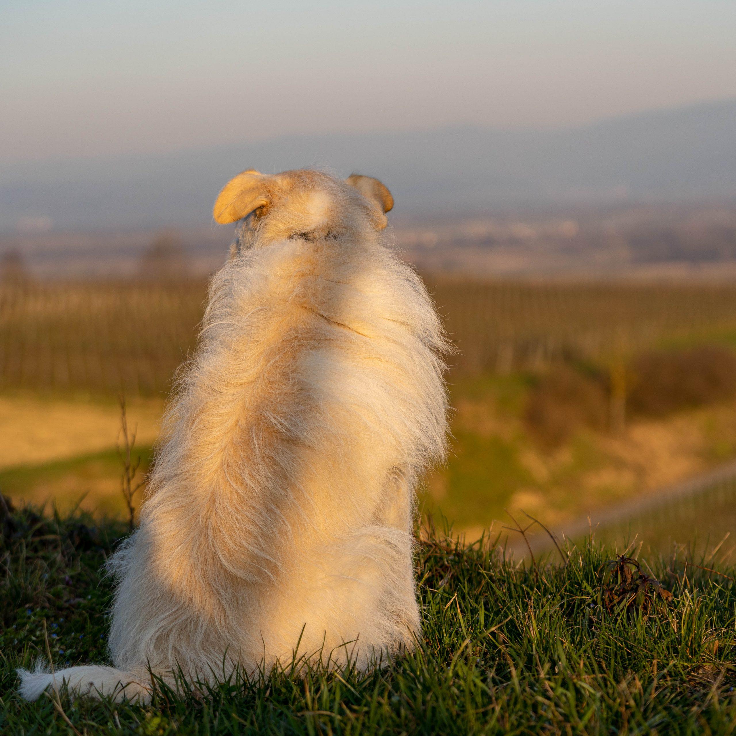 Hund blickt auf die Welt - Perspektive des Hundes
