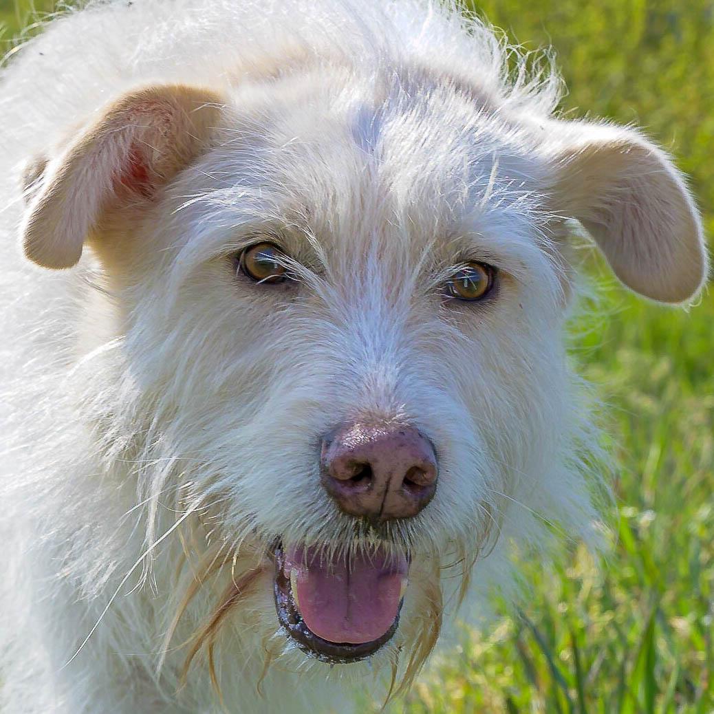 Gesicht einer Hündin - Körpersprache Hund