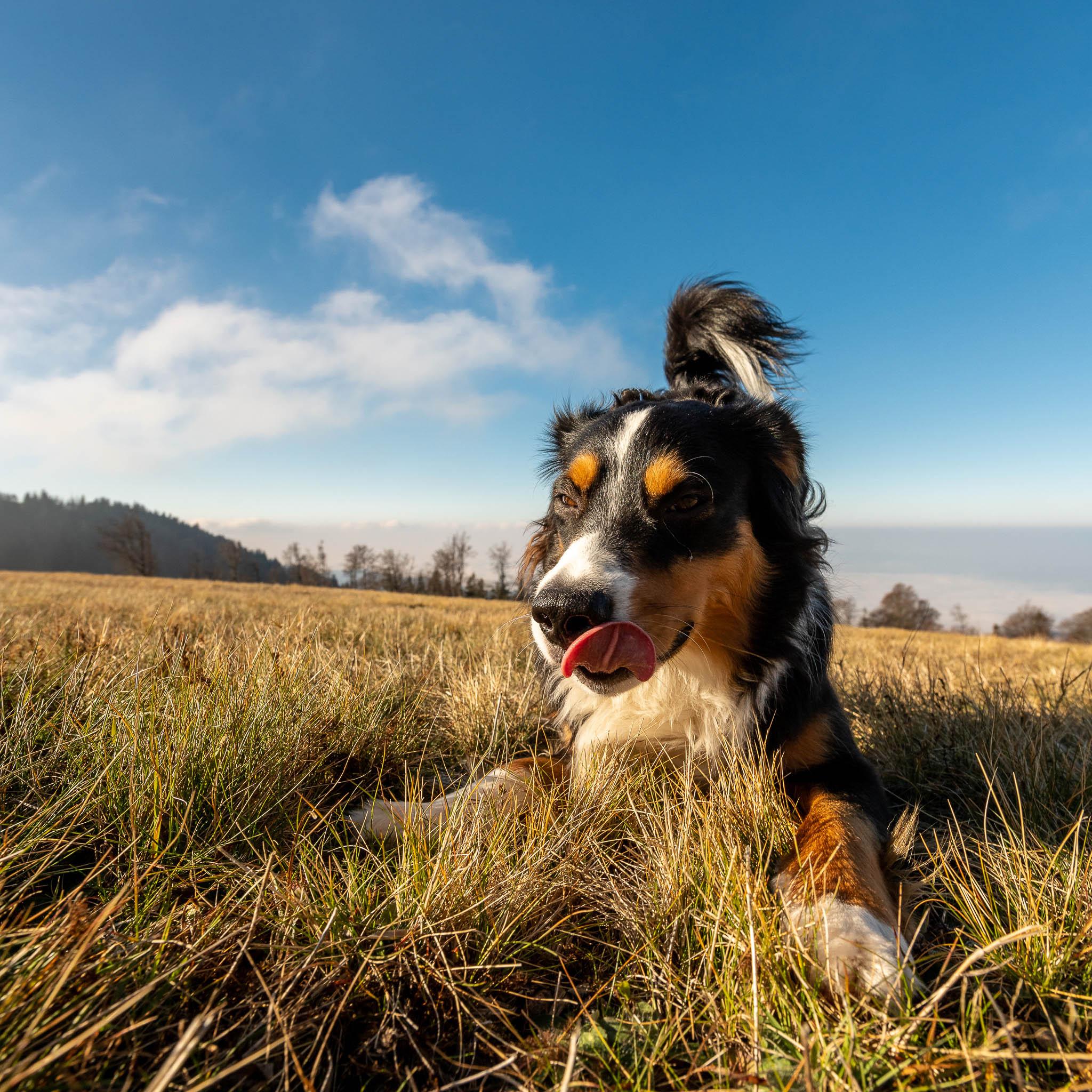 Aussi in Spielaufforderungs-Position - Körpersprache Hund